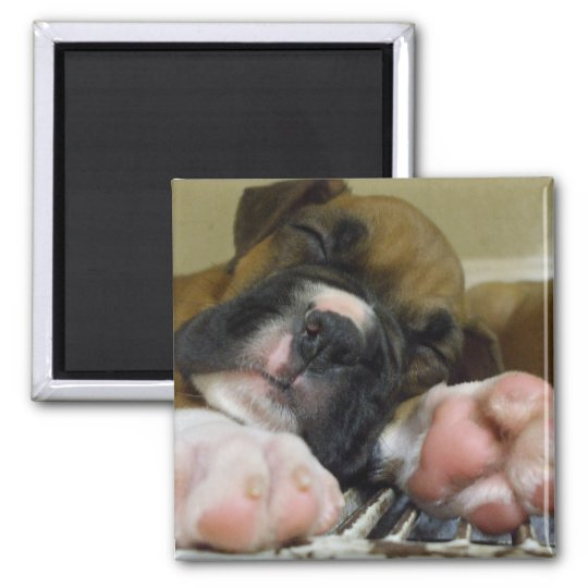 Sleeping Boxer puppy square magnet
