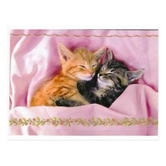 Sleeping Buddies; Tuckered Out Postcard