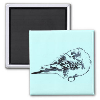 Sleeping Budgie Drawing 2 Inch Square Magnet