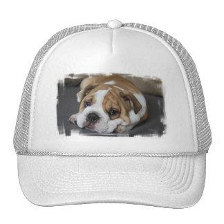 Sleeping Bulldog Baseball Hat