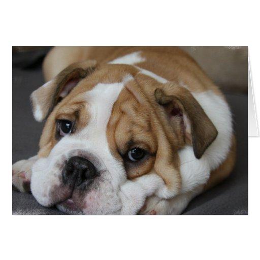Sleeping Bulldog Greeting Card