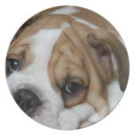Sleeping Bulldog Plate