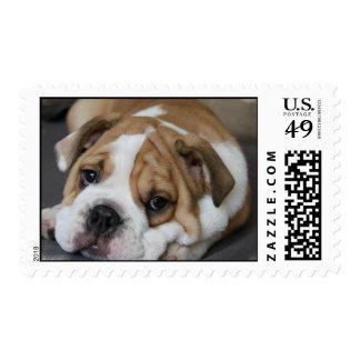 Sleeping Bulldog Postage Stamp