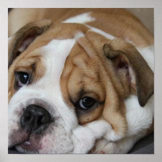 Sleeping Bulldog Poster
