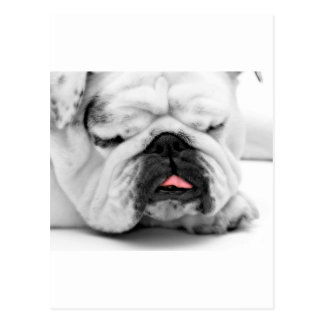 Sleeping Bulldog Puppy Dog Lovers Photo Design Post Cards