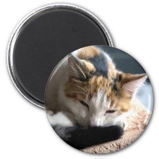 Sleeping Calico Cat 2 Inch Round Magnet