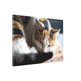 Sleeping Calico Cat Canvas Print