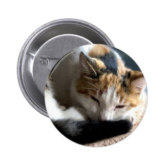 Sleeping Calico Cat Pinback Button