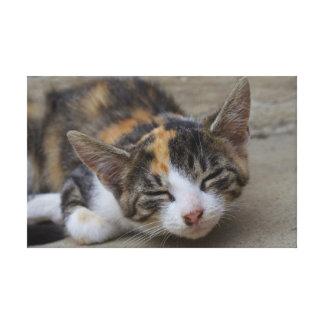 Sleeping Calico Kitten Canvas Print