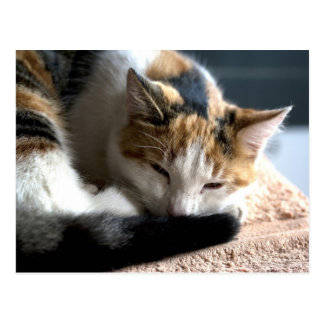 Sleeping Calico Postcard
