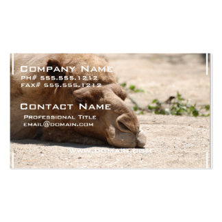 Sleeping Camel Double-Sided Standard Business Cards (Pack Of 100)