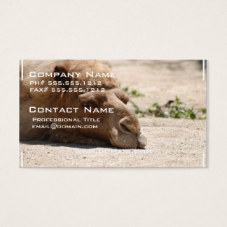 Sleeping Camel Business Card