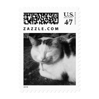 Sleeping Cat (Black & White Photography) - Small Stamp