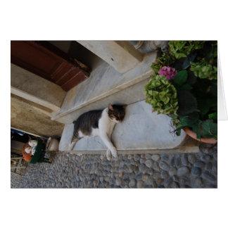 Sleeping Cat in Cinque Terre, Italy Card