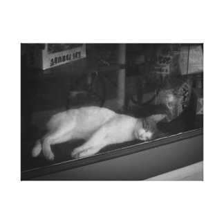 Sleeping Cat in Store Window Canvas Print