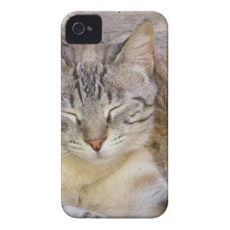 Sleeping cat iPhone 4 cover