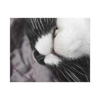 sleeping cat nose upside down kitty canvas prints