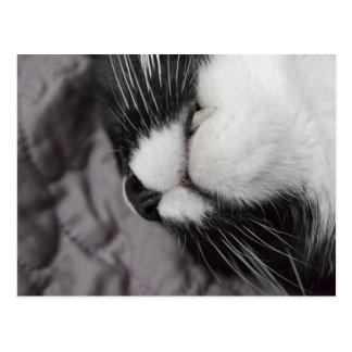 sleeping cat nose upside down kitty postcard
