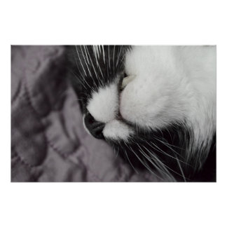 sleeping cat nose upside down kitty print