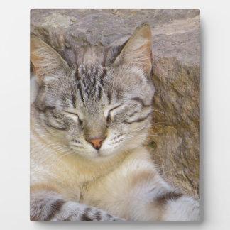 Sleeping cat plaque