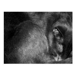 Sleeping Cat Postcard