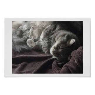 Sleeping Cat Poster