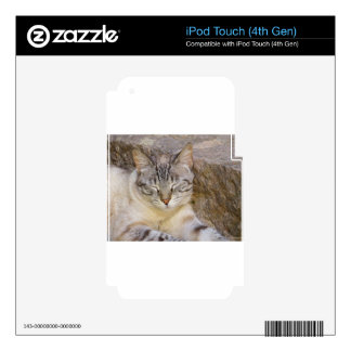 Sleeping cat skins for iPod touch 4G