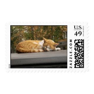 Sleeping cat stamp