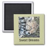 Sleeping Cheetah Cub Photo 2 Inch Square Magnet