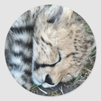 Sleeping Cheetah Cub Photo Round Stickers