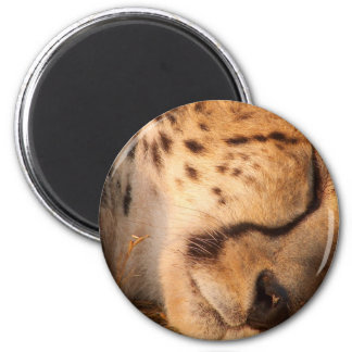 Sleeping Cheetah Magnet
