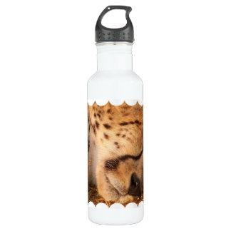 Sleeping Cheetah 24oz Water Bottle