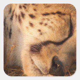 Sleeping Cheetah Stickers