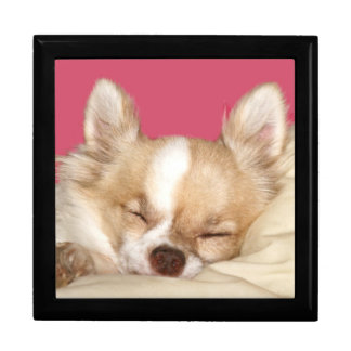 Sleeping chihuahua gift box