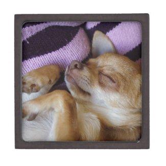Sleeping Chihuahua Premium Gift Box