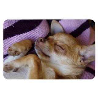 Sleeping Chihuahua Rectangular Photo Magnet