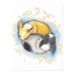 Sleeping Chihuahuas Postcard