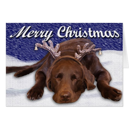Sleeping Chocolate Lab With Antlers Photograph Card