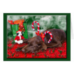 Sleeping Chocolate Lab With Peppermint Stick Hat Cards