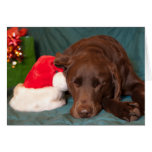 Sleeping Chocolate Lab With Santa Hat Photograph Greeting Card