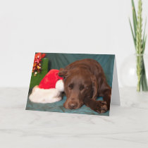 Sleeping Chocolate Lab With Santa Hat Photograph Holiday Card