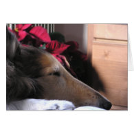 Sleeping Collie Holiday Card