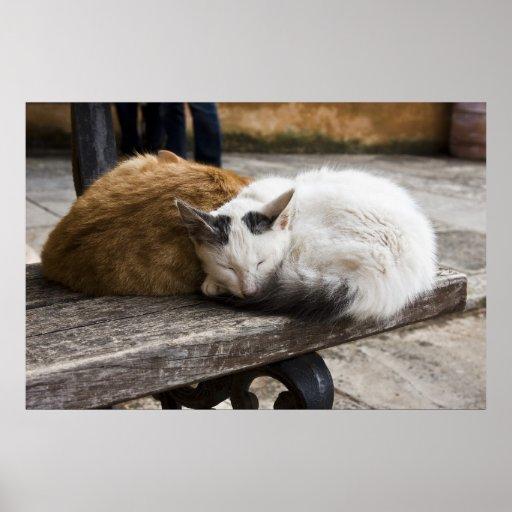 Sleeping Cretan Cats Posters