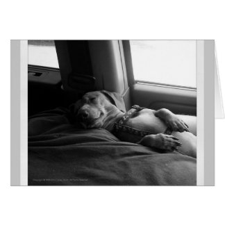 Sleeping Dachshund Note card Man's best friend