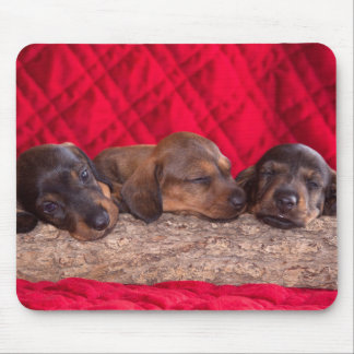 Sleeping Dachsund Puppies Mouse Pad