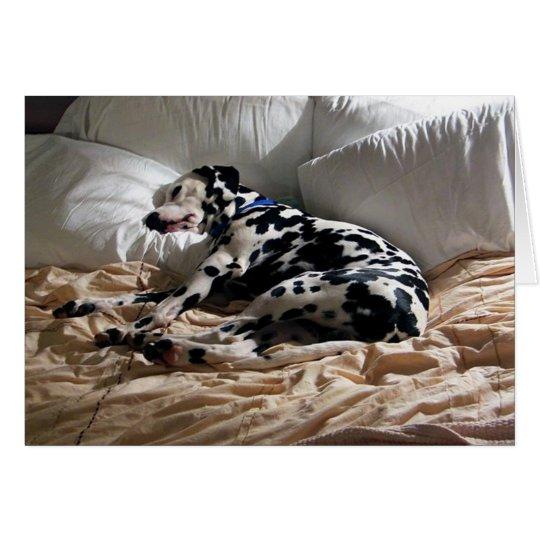 Sleeping Dalmatian Card