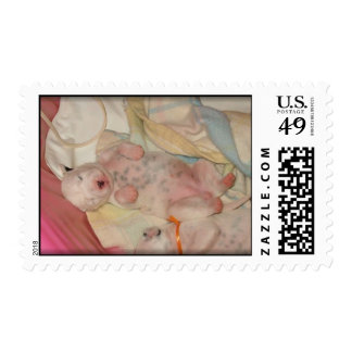 Sleeping Dalmatian Puppy Postage Stamps