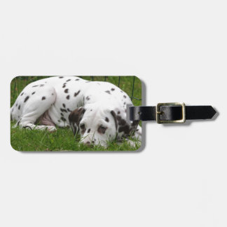 Sleeping Dalmation laying in field Tags For Bags