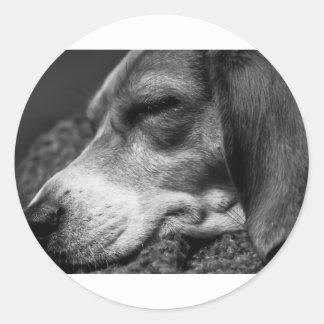 Sleeping Dog Classic Round Sticker