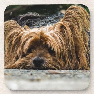 Sleeping Dog Drink Coasters